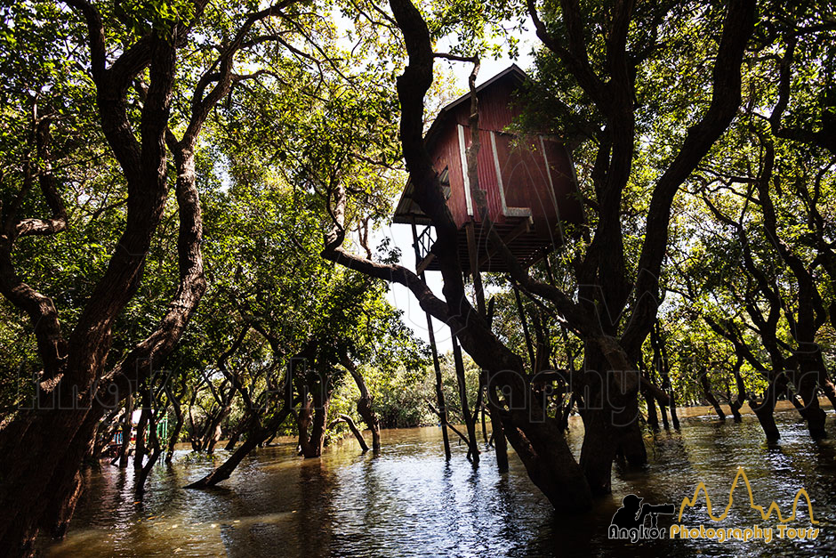 Flooded forest Tonle Sap lake