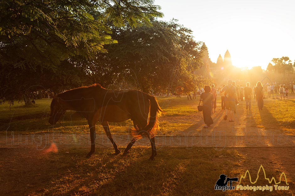 horse at sunrise in front of Angkor Wat temple Angkor photo tours