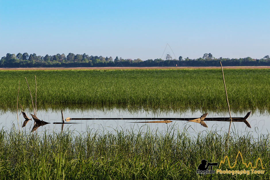 boats in paddy field siem reap photography tours
