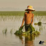 flooded paddy fields siem reap photo tour