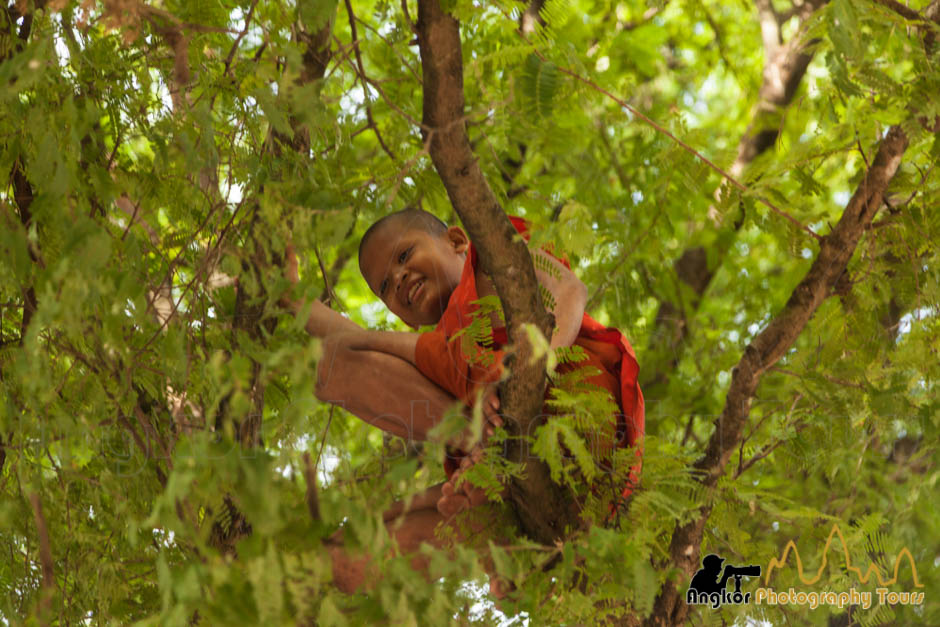 young cambodian monk tree